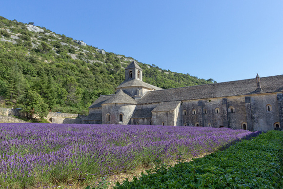 Sénanque Abbey with lavender fields